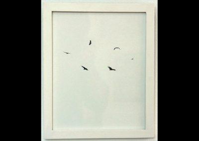 """""""Aves"""" de Jimmy Villegas"""